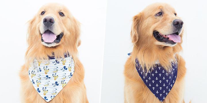bandana para cachorro marinheiro