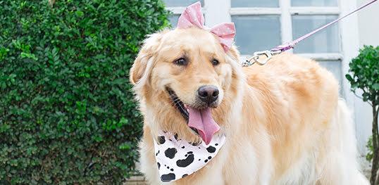 bandana para cachorro no atacado