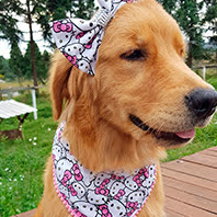 bandana para cachorro cliente