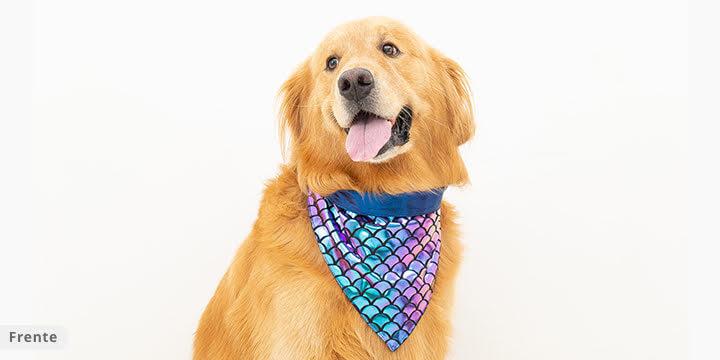 bandana para cachorro sereia