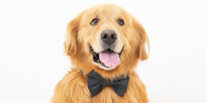 gravata para cachorro chiq