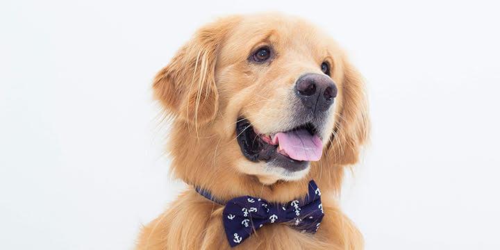 gravata para cachorro marinheiro
